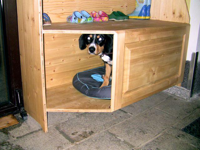 hundeh tte gretes sennenhunde blog. Black Bedroom Furniture Sets. Home Design Ideas