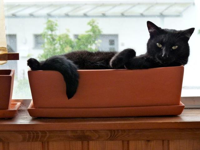 wir warten auf den nikolaus gretes sennenhunde blog. Black Bedroom Furniture Sets. Home Design Ideas