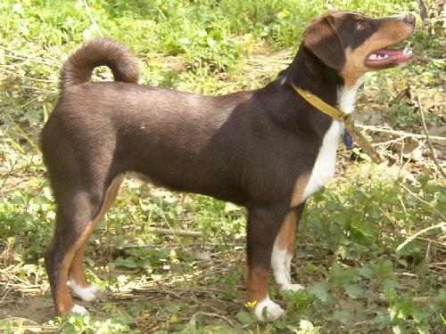 Frage « Gretes Sennenhunde Blog