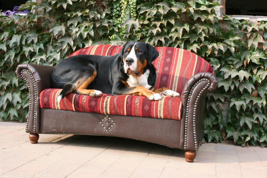 Lernen Macht Ihr Spass Gretes Sennenhunde Blog