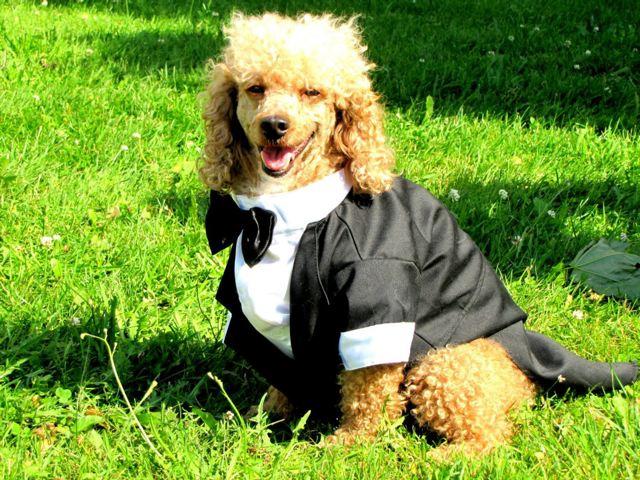 Hochzeit Mit Eingebunden Der Familienhund Gretes Sennenhunde Blog