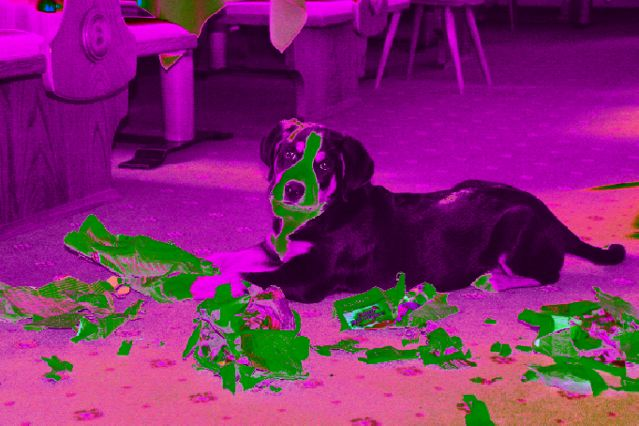 grosser schweizer sennenhund wohnt im familien hotel. Black Bedroom Furniture Sets. Home Design Ideas
