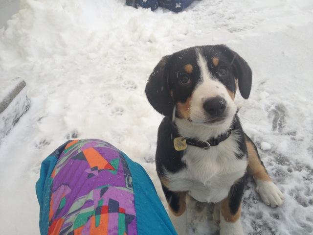 Sammy schickt Winter-Grüsse an die Geschwister