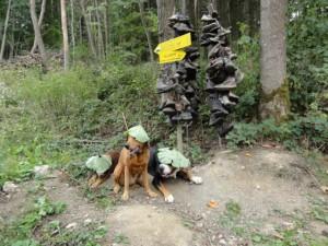 geburtstagsfoto Hund