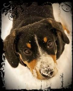 erster Schnee und Hund