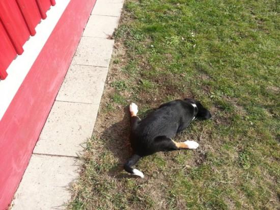 Hund sucht  Maus