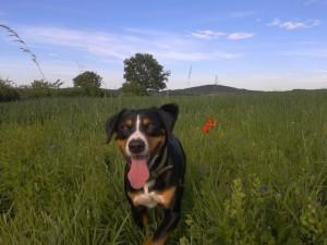 Anbei ein Foto von Zico, wir nennen unseren Hund Spookie :-)