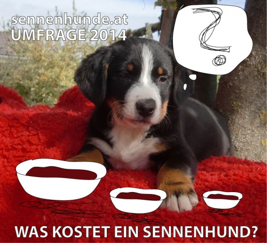 umfrage was kostet ein sennenhund swissydog gretes sennenhunde blog. Black Bedroom Furniture Sets. Home Design Ideas