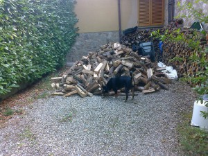 Otto findet Holz