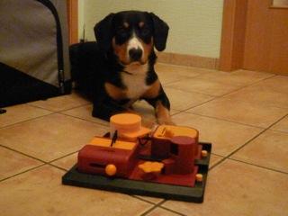 geschenk appenzeller sennenhund
