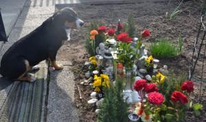 Am Grab meiner Vorgänger Hunde von meinem Frauchen.