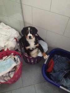 Kann ich die  Wäsche warm halten ?