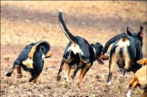 freilaufende Hunde