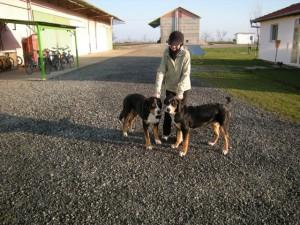 grosse Sennenhunde  in Rumänien