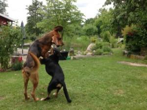 Savino und Hunter beim Spielen