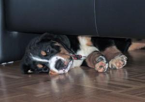 Mein Schlafplatz hinter der Sofa wird mir bald zu eng. Frauchen muss bald neue Möbel kaufen, damit ich wieder gut schlafen kann :-))