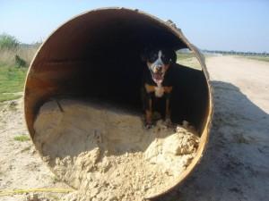 Gipsy schickt Grüsse an die Gänsewiesen Hunde