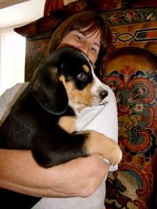 Entlebucher Sennenhund Reise nach Kanada