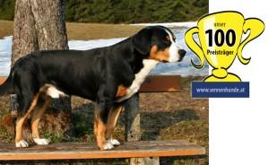_Sennenhund_100_Champion