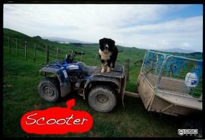 Hund auf Scooter