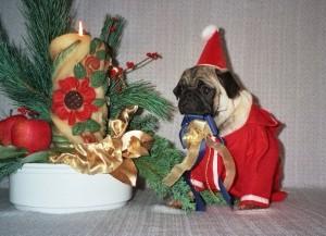 Weihnachts Mops
