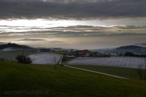 Sennenhundehof Stadlbauer