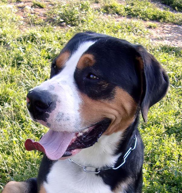 Hund In Not Archive Gretes Sennenhunde Blog