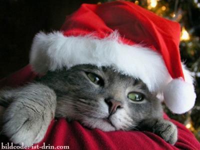 Weihnachts-Grüsse-Wünsche - Gretes Sennenhunde Blog