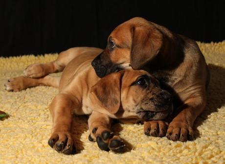 Kann man bei Welpen schon erkennen, welcher Hund es einmal sein wird?