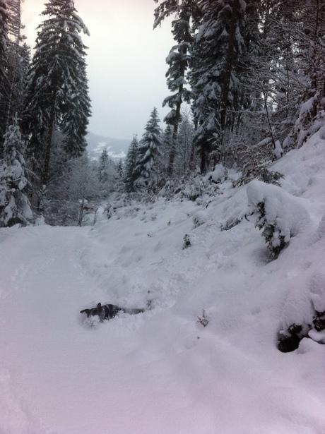 GSS auf Talfahrt