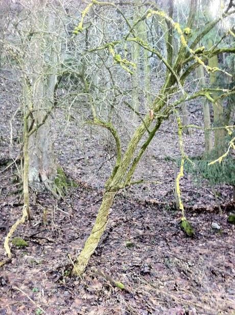 Was könnte diesen Baum veranlasst haben, sich zu drehen und zu winden?
