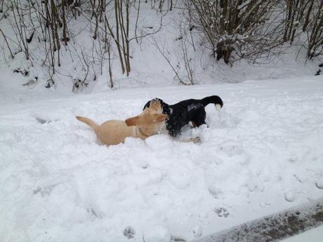 Tollen im Schnee, huche!