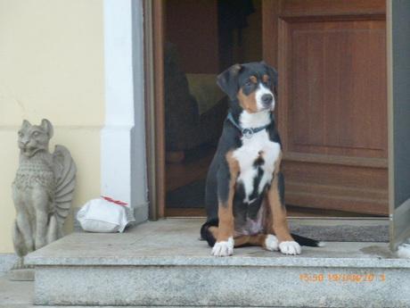 Vor der Türe, da ist Balu schon aufmerksam und übt sich im Aufpassen