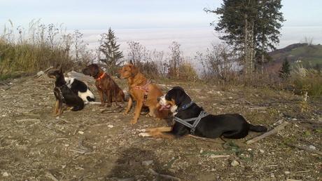 Bei dieser Hundesuche sind die menschlichen Sinne gefragt. Wo steckt der sechste Hund?
