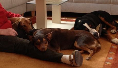 Alle drei halten engen Körperkontakt - wie angenehm.