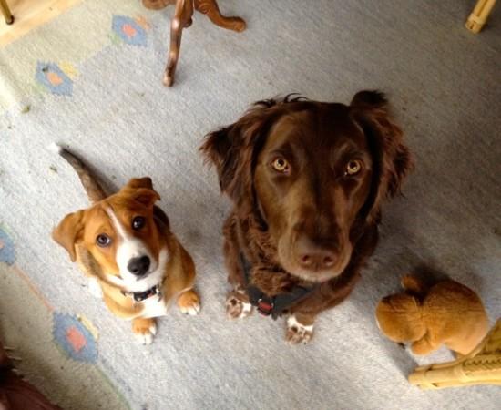 swissydog mit freund