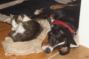 Bodo ist ein toller Hund, der mit Liebe erzogen wurde und Liebe verdient