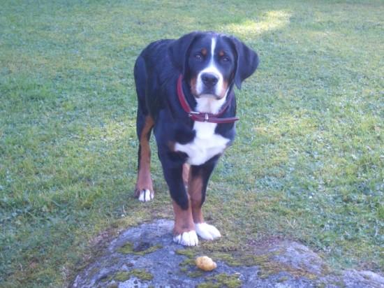 Unser geliebter Hund Bodo, den wir aus Krankheitsgründen nicht mehr bei uns haben können, feiert heute seinen 1. Geburtstag. Lieber Bodo, wir wünschen dir, dass du eine liebevolle neue Familie gefunden hast.   Silvia und Heinz