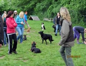 Gruppenarbeit mit 10-20 Hunden