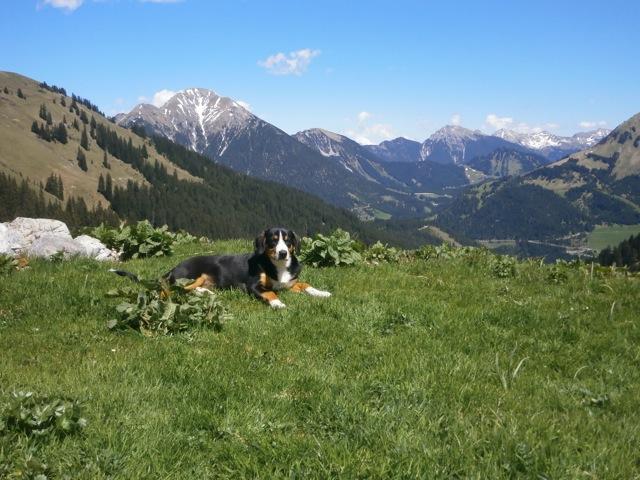 """Unser Almsommer hat bereits begonnen und Tuza schnuppert schon mal """"Almluft"""" Sonnige Grüße aus Tirol   Fam. B"""