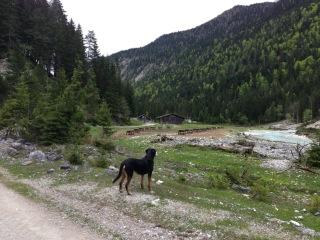 Grosser Schweizer beim Wandern