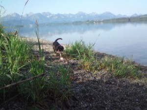 Entlebucher am Forggensee