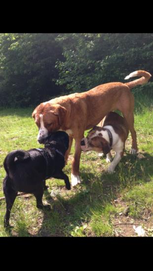 Bruno liebt kleine Bulldoggen :-)