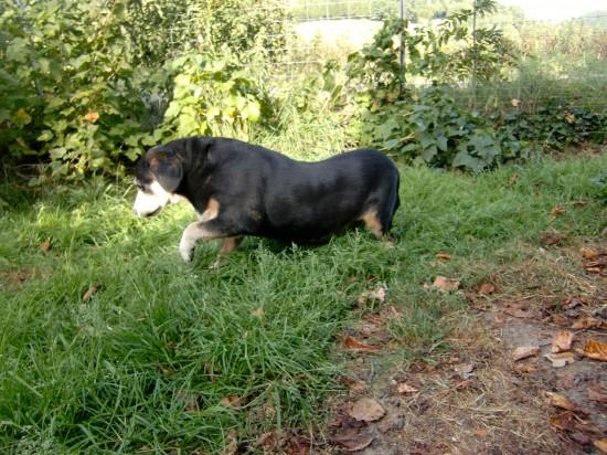 Yvette... ich glaube da gibt es was interessantes im Gras