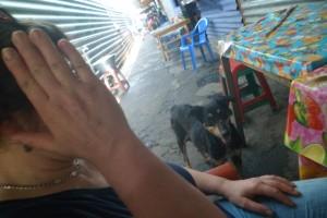 Frei lebende Hunde halten sich gerne bei Busshaltestellen, auf Märkten, Imbissstellen auf, denn dort fällt für sie am leichtesten Abfall an.