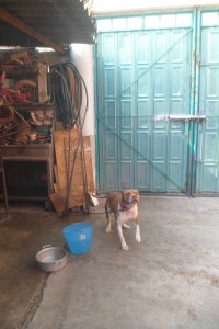 Kettenhund in Mexiko