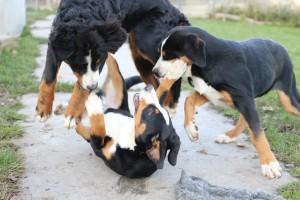 Hund im Training und Spiel