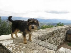 Hund in Kroatien