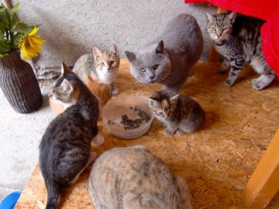Katzen mit Freilauf
