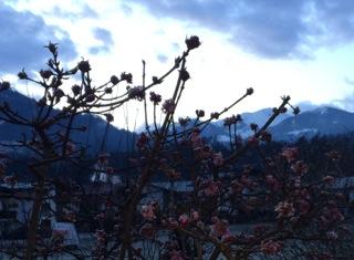 Winterblüten